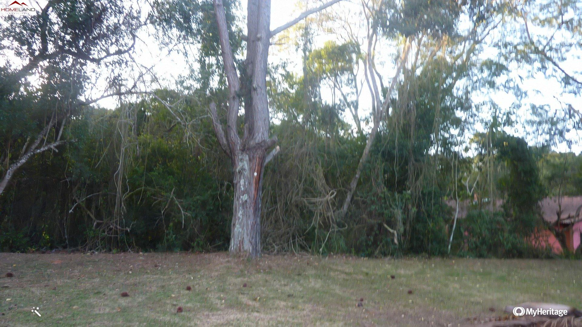 HL-182 Terreno de 1800m² e autorização da CETESB no Patrimônio do Carmo R$ 250 mil